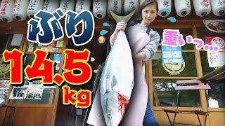 【巨大】市場でも珍しい14.5kgのブリ!魚屋が教える!臭みなし!味しみしみ!絶対おいしくできるぶり大根の作り方〜gigantic Japanese yellowtail〜