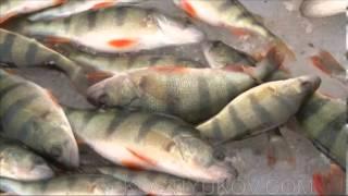 Зимняя рыбалка в Астрахани(Конец января. Для жители средней полосы наступило так называемое