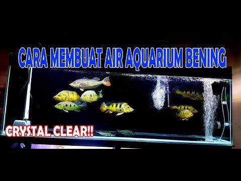 Filtrasi Untuk Ikan Predator