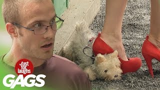 No Dogs Were Harmed in the Making of These Pranks - Best of Just For Laughs Gags