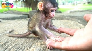 Cute newborn Farrah adorable play with my fingers | Farrah not afraid of to play | Monkey Daily 3359