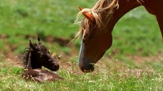 SHOCKING VIDEO:  FOAL DRAMA - Missing by Vangelis