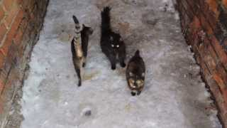Голодные котята