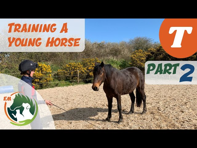 First attempt at LIBERTY | Starting a young horse | Training series | Emma Massingale (Part 2 of 3)
