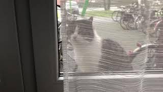Друзья прошу вашего совета что делать с котом ?