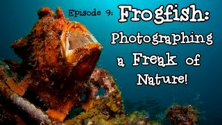 Frogfish: Photographing a Freak of Nature! – Borneo from Below: Ep09