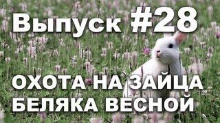 Выпуск 28: Охота на зайца беляка весной с собакой видео 2013 часть 1