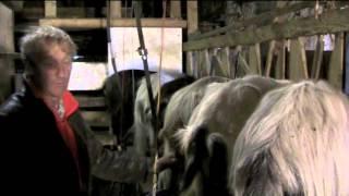 La chèvre de race pyrénéenne version flash 2'