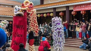 Chinese New Year 2019 Celebration at IBPS (Austin, TX)-Dragon and Lion Dance