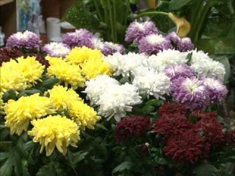 видео: Грядки в порядке - Растения для клумбы.wmv