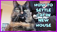 Soothing Cat Music Youtube Kitten