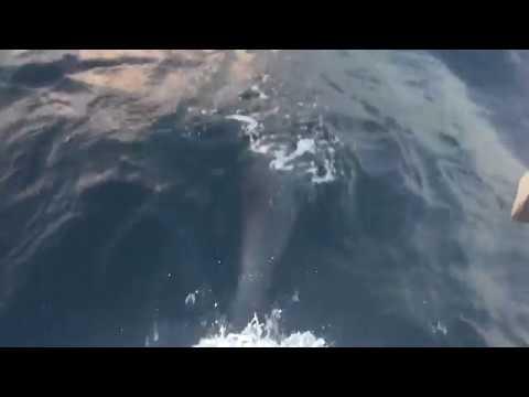 Ocean Dolphins 1