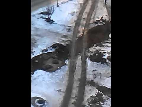 секс знакомства казахстан степногорск