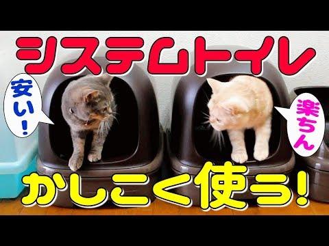 猫のシステムトイレより安く簡単に掃除ができる方法をご紹介パインウッドと激安ペットシーツを活用