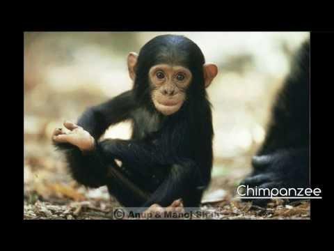 Endangered animals 2016