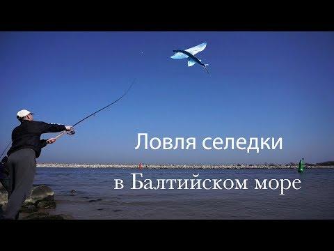 Ловля селедки в Балтийском море.
