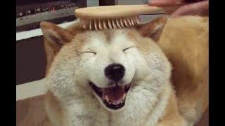 happ-shober-get-comb