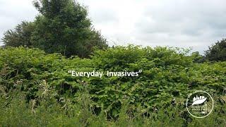 Everyday Invasives