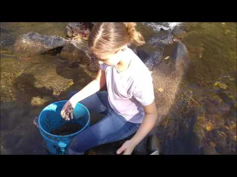 Little River Gold Prospecting Tennessee