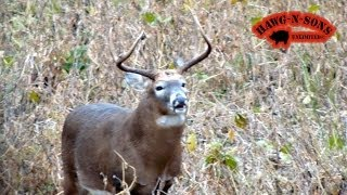 Self Filmed Deer Whitetail BowHunting  - Chase Phase Rutting Bucks