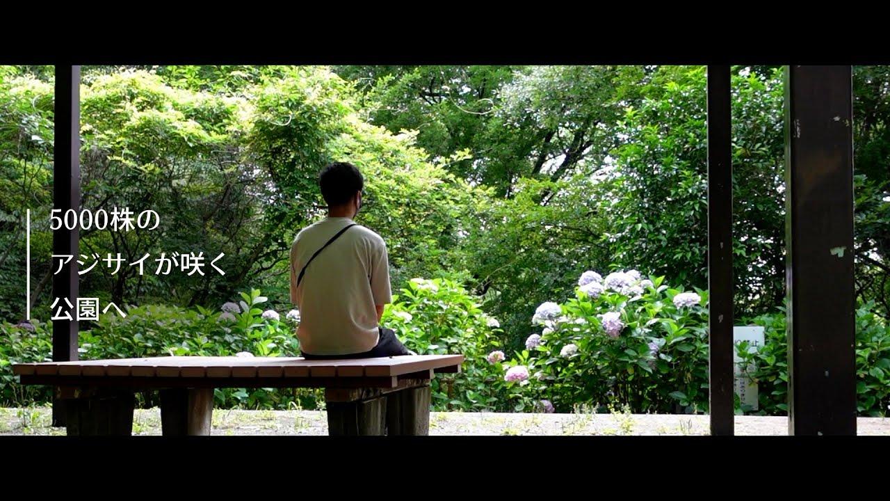 【アジサイ】自然と一体になれる公園にアジサイを見に行ってみた【vlog】