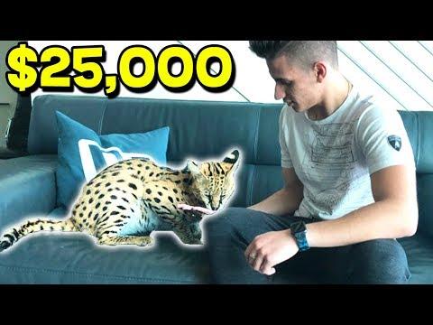 WE FOUND A $25,000 WILD CAT!!!