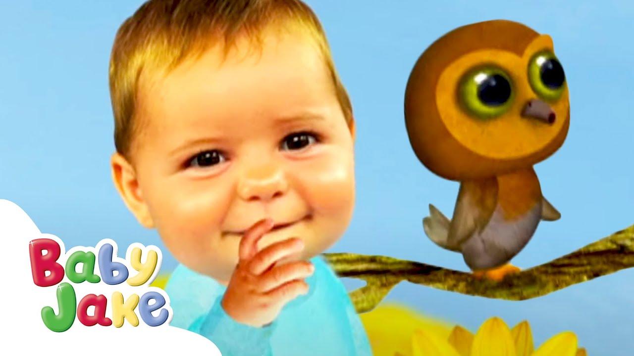 Baby Jake | Meet Mr. Owl 🦉 | Yacki Yacki Yoggi