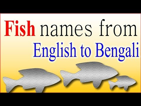 10 Fish names from English to Bengali ( বাংলা ) for kids
