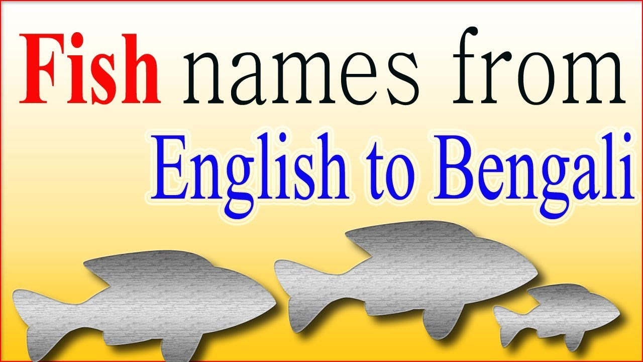 10 Fish names from English to Bengali ( বাংলা ) for kids | Children  Education