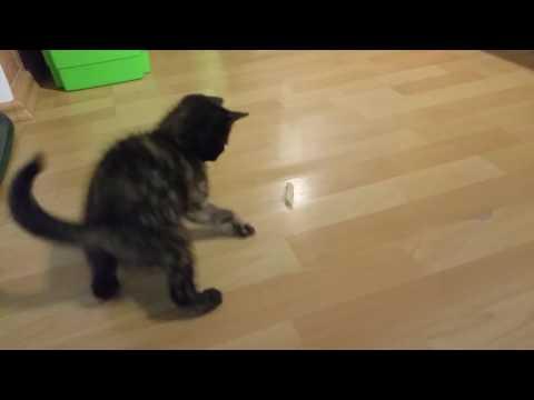 Katze vs. Nudel
