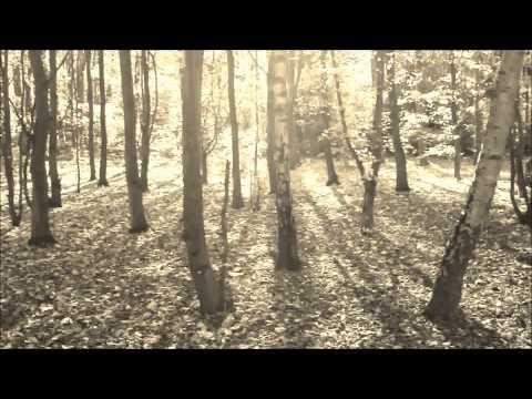 Mar de copas - Entre los árboles