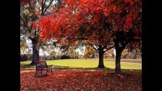 Tình Thu đơn côi - Tiếng hát Huỳnh Thu Vân