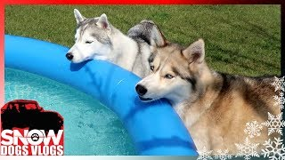 cleaning-the-huskies-pool