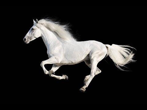 Metin 2 Likan #4 Misja na konia