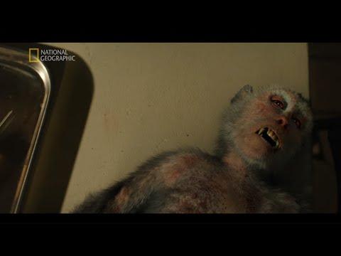 Zakażona małpa wybudziła się podczas badania! [Strefa skażenia]