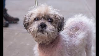 LIVE: Adoptable Dog in New York City - CODY | The Dodo Live - ADOPT THIS DOG