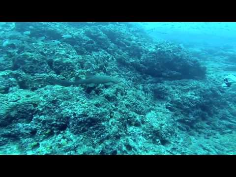 World's Best Diving & Resorts: Rich Coast Diving