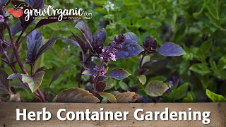 Container Gardens -- Herbs