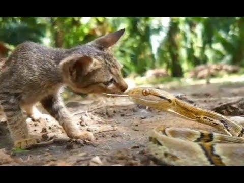 蛇が手当たり次第に猫に飛び掛かる