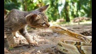 体長3メートルの蛇が現れました。大変どうもうで誰にでも 噛みつこうと...