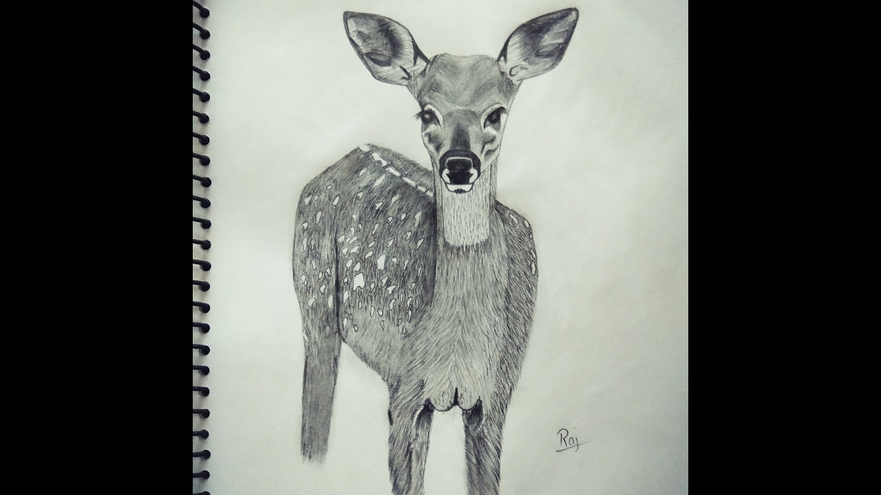 how to draw a realistic baby deer fawn youtube