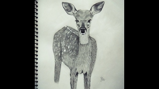 How to Draw a Deer Fawn Picture step by step tutorial