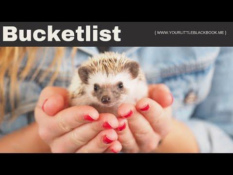 Harry Hedgehog Cafe Tokyo // HOTSPOT vlog #18 // Your Little Black Book
