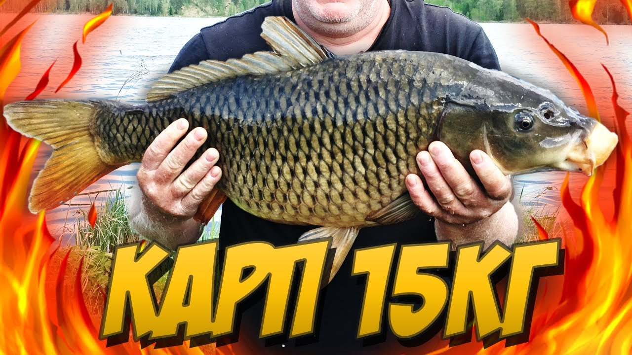 Первая трофейная рыбалка на карпа после карантина!