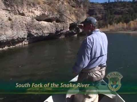 Yellowstone Cutthroat on the South Fork Snake River