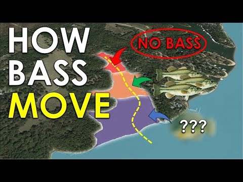 Pro Tip For Finding Bass On Any Lake | Bass Fishing Beginner Guide