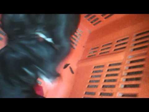 vídeo porno porno en vivo