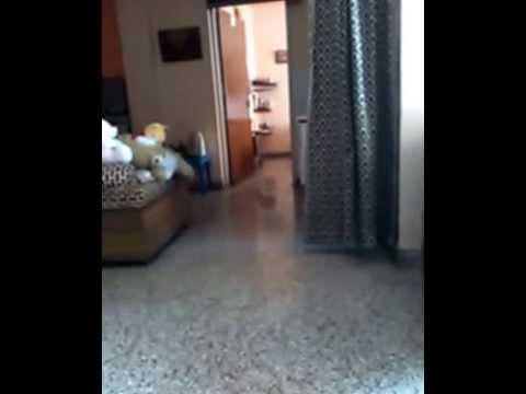Webcam Tit Flash Gif