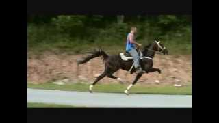 Repeat youtube video What A Day-Direct Western Hanover mare for sale!