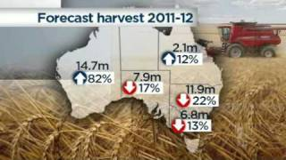 Bumper wheat harvest damaged by rains